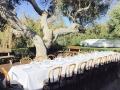 winerygarden